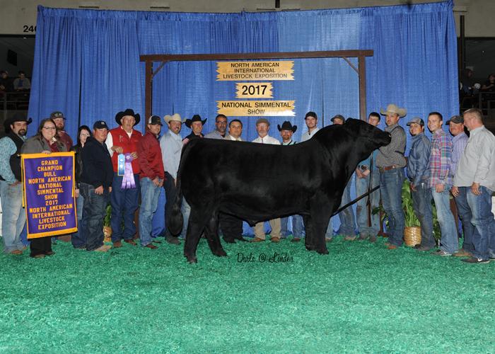 Purebred Simmental Bull of the Year, CMFM Crossroads 224C