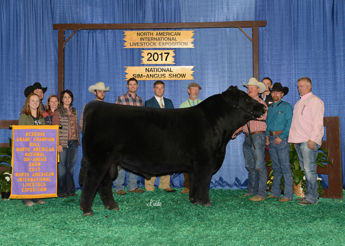 Percentage Simmental Bull of the Year, Rocking P Die Hard C060