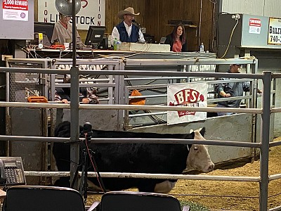 Luke Bowman served as SimSpecialist at the Buckeye's Finest Sale Saturday night in Ohio